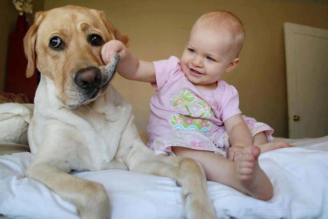 beneficios de las mascotas en los niños